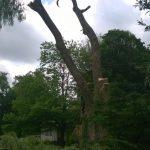 Monster Willow 11