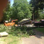 Massive Cottonwood Removal 10