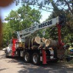 Massive Cottonwood Removal 15